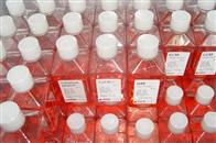 结晶紫中性红胆盐琼脂(VRBA)