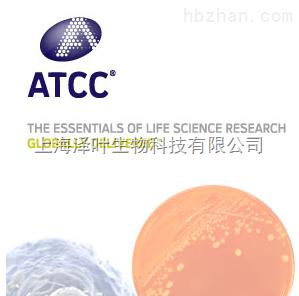 人视网膜微血管内皮细胞