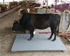内蒙古3吨称牛电子地磅包邮价格