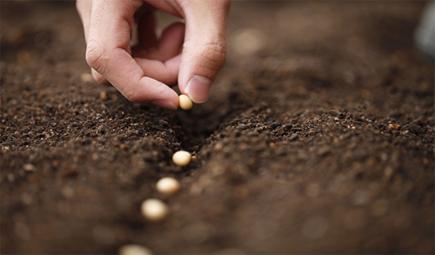 土壤里的软体动物有哪些