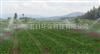 广东增城大型农场农作物喷灌设备